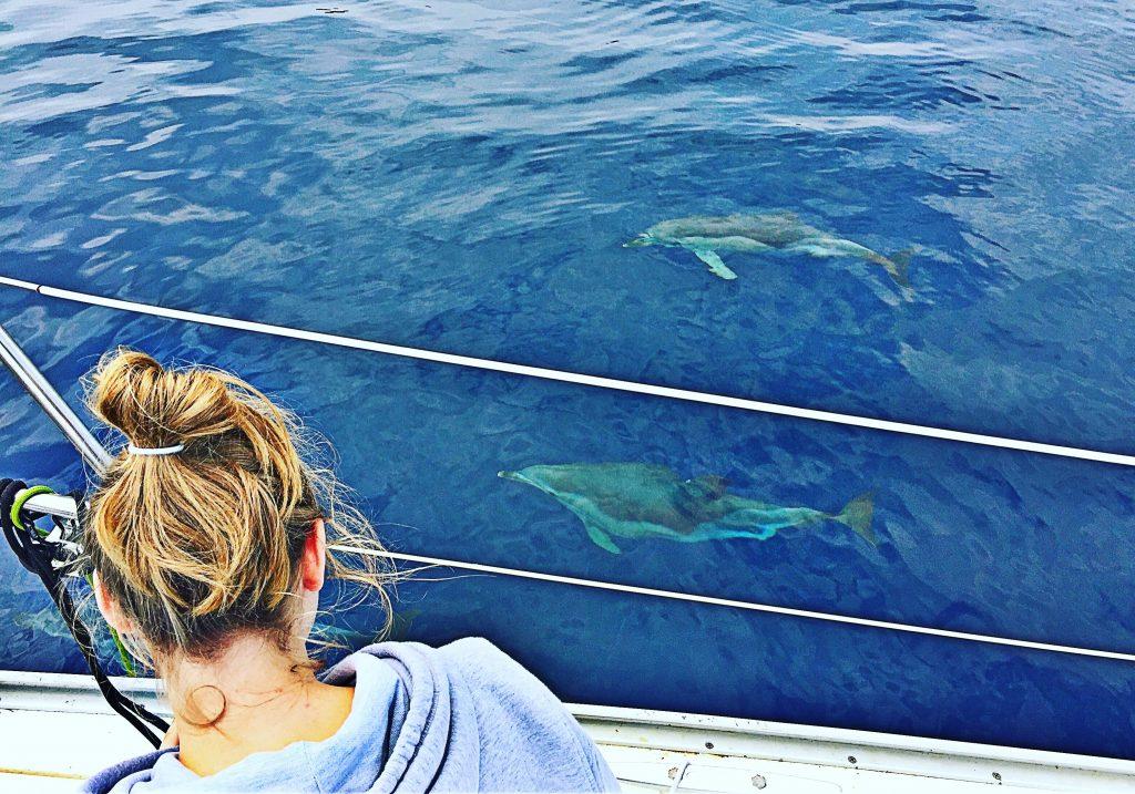 Delfiny w Grecji